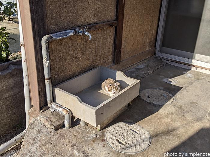 三郎島の猫